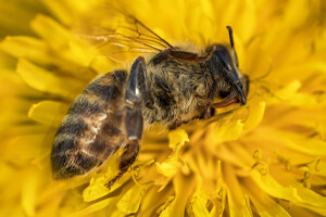 petition-insectes-morts-abeille-300x200