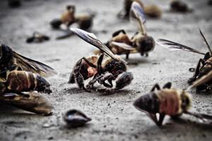 abeille-petition-300