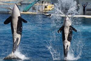 orque-marinland-2022-1