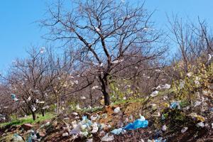 normes-biodegradables-300 (1)