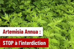 artemisa-annua-vente-libre