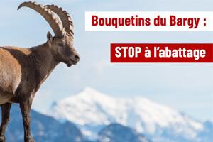 bouquetins-bargy-abattage