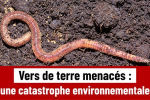 vers-de-terre-extinction
