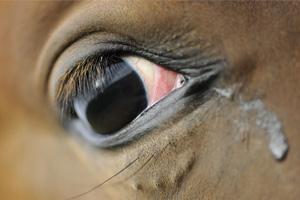 stop-mutilation-chevaux
